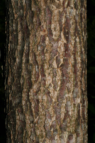 Image http://bioimages.vanderbilt.edu/lq/baskauf/wnybi--br52439.jpg