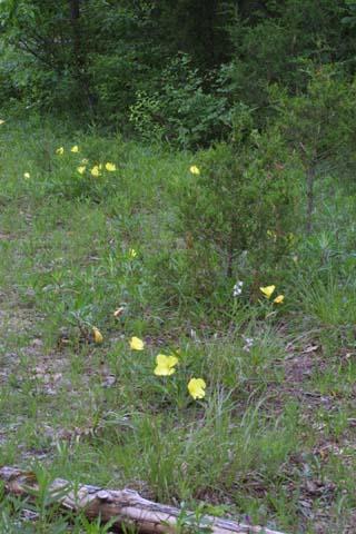 Image http://bioimages.vanderbilt.edu/lq/baskauf/woemam-wpdistant24929.jpg