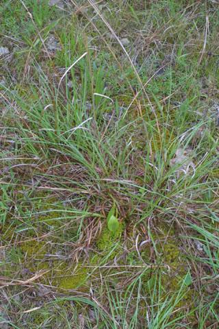 Image http://bioimages.vanderbilt.edu/lq/baskauf/wopen--wpdistant34332.jpg