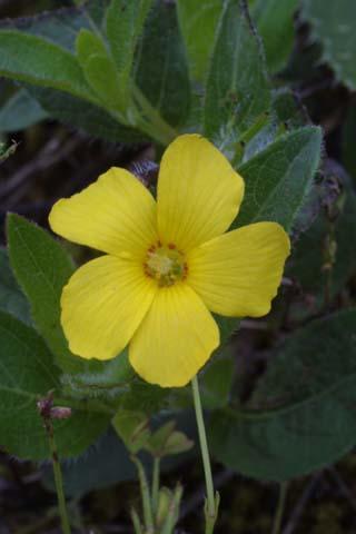 Image http://bioimages.vanderbilt.edu/lq/baskauf/woxpr--flfront25046.jpg