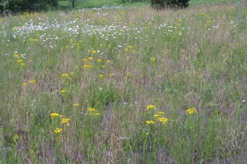 Image http://bioimages.vanderbilt.edu/lq/baskauf/wpaan6-wpmass23619.jpg