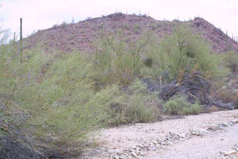 Image http://bioimages.vanderbilt.edu/lq/baskauf/wpami5-wpdistant14355.jpg