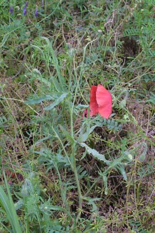 Image http://bioimages.vanderbilt.edu/lq/baskauf/wparh2-wp24845.jpg