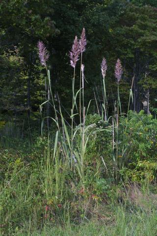 Image http://bioimages.vanderbilt.edu/lq/baskauf/wphau7-wp38080.jpg