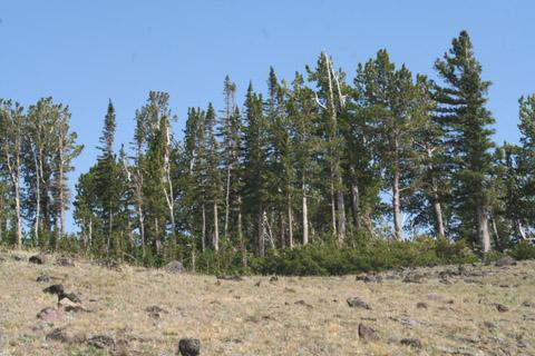 Image http://bioimages.vanderbilt.edu/lq/baskauf/wpial--wpdistant61775.jpg