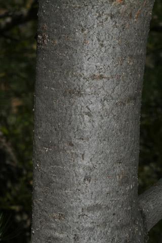 Image http://bioimages.vanderbilt.edu/lq/baskauf/wpice--brsmall54354.jpg
