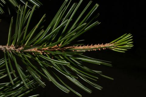 Image http://bioimages.vanderbilt.edu/lq/baskauf/wpice--lfseveral54335.jpg