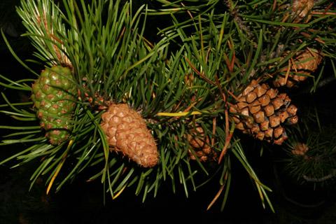 Image http://bioimages.vanderbilt.edu/lq/baskauf/wpico--coseveral59983.jpg