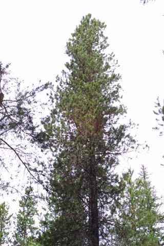 Image http://bioimages.vanderbilt.edu/lq/baskauf/wpico--wp42465.jpg