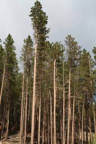 Image http://bioimages.vanderbilt.edu/lq/baskauf/wpico--wpstand60766.jpg