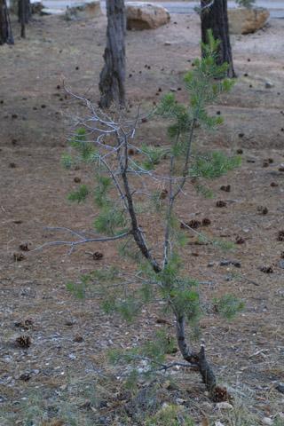 Image http://bioimages.vanderbilt.edu/lq/baskauf/wpied--wpsmall14132.jpg