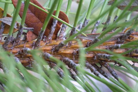 Image http://bioimages.vanderbilt.edu/lq/baskauf/wpien2-tw14577.jpg