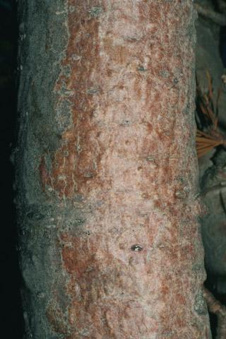 Image http://bioimages.vanderbilt.edu/lq/baskauf/wpifl2-brsmall60298.jpg