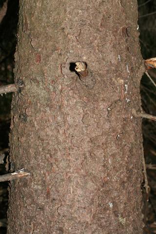Image http://bioimages.vanderbilt.edu/lq/baskauf/wpigl--br50392.jpg