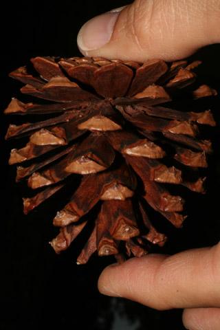 Image http://bioimages.vanderbilt.edu/lq/baskauf/wpilec-cofemale54098.jpg