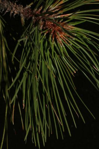 Image http://bioimages.vanderbilt.edu/lq/baskauf/wpilec-lfseveral54087.jpg