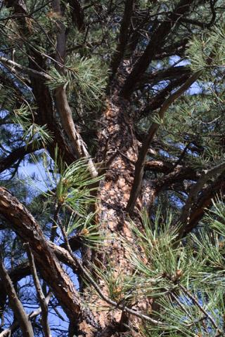 Image http://bioimages.vanderbilt.edu/lq/baskauf/wpipo--wplook-up14013.jpg