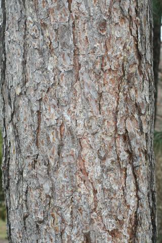 Image http://bioimages.vanderbilt.edu/lq/baskauf/wpire--br50500.jpg