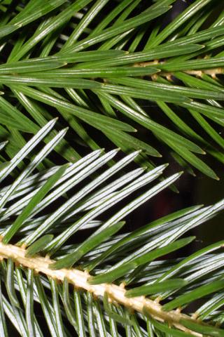 Image http://bioimages.vanderbilt.edu/lq/baskauf/wpisi--lfuplow40721.jpg