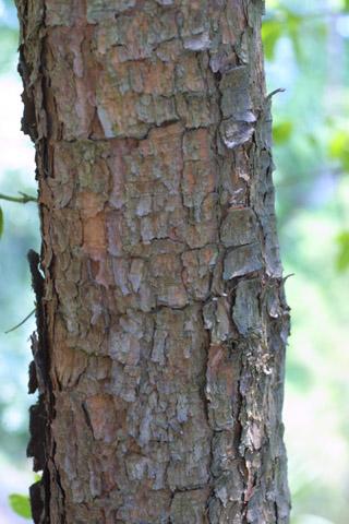 Image http://bioimages.vanderbilt.edu/lq/baskauf/wpivi2-brmedium13509.jpg