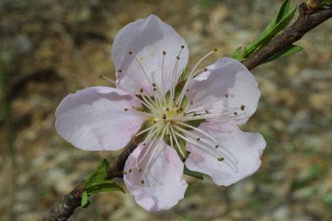 Image http://bioimages.vanderbilt.edu/lq/baskauf/wprpe3-flfront18041.jpg