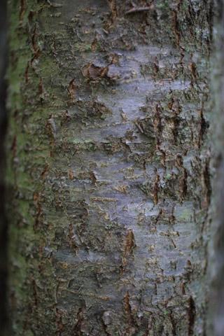 Image http://bioimages.vanderbilt.edu/lq/baskauf/wprse2-brsmall11327.jpg