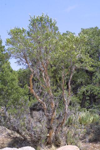 Image http://bioimages.vanderbilt.edu/lq/baskauf/wpust--wp14046.jpg