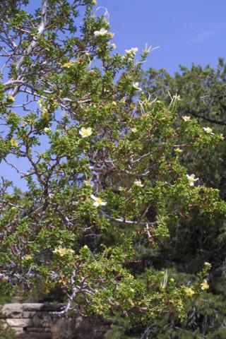 Image http://bioimages.vanderbilt.edu/lq/baskauf/wpust--wpin-flower14048.jpg