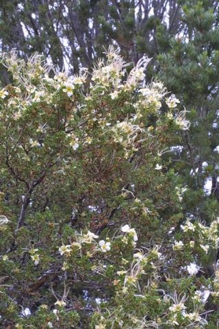 Image http://bioimages.vanderbilt.edu/lq/baskauf/wpust--wpin-flower14101.jpg