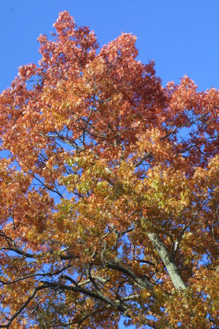 Image http://bioimages.vanderbilt.edu/lq/baskauf/wquco2-wplookup16858.jpg