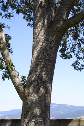 Image http://bioimages.vanderbilt.edu/lq/baskauf/wquga4-brlarge42372.jpg