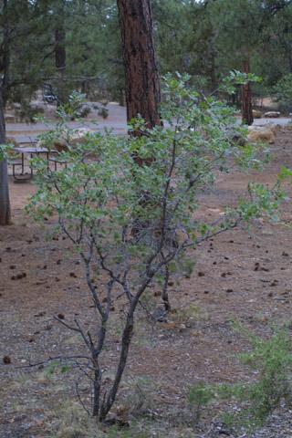 Image http://bioimages.vanderbilt.edu/lq/baskauf/wqugag-wpsmall14136.jpg