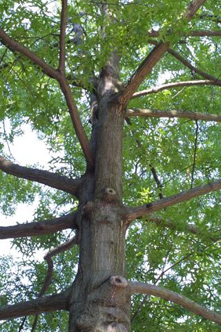 Image http://bioimages.vanderbilt.edu/lq/baskauf/wqupa2-wplookup-large12625.jpg