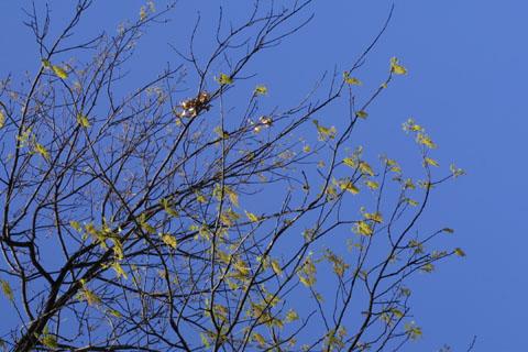 Image http://bioimages.vanderbilt.edu/lq/baskauf/wquru--flin-flower-10498.jpg