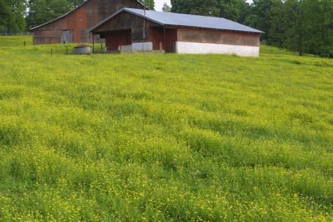 Image http://bioimages.vanderbilt.edu/lq/baskauf/wrasa--wpmass-pasture23617.jpg