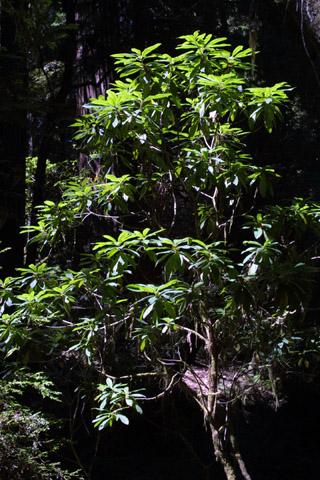 Image http://bioimages.vanderbilt.edu/lq/baskauf/wrhma3-wp41959.jpg