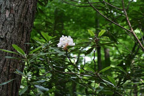 Image http://bioimages.vanderbilt.edu/lq/baskauf/wrhma4-fldistant49103.jpg