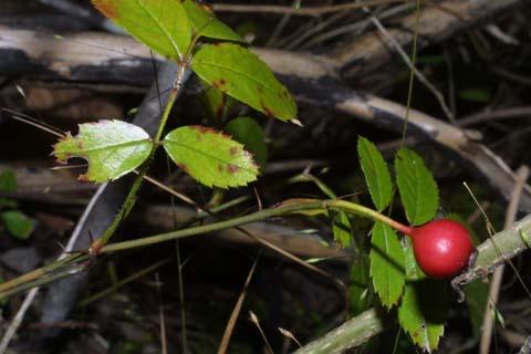 Image http://bioimages.vanderbilt.edu/lq/baskauf/wroca4-frdistant29874.jpg