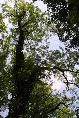 Image http://bioimages.vanderbilt.edu/lq/baskauf/wrops--wplookup-large11499.jpg