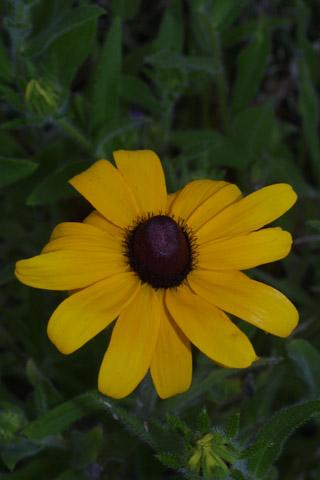Image http://bioimages.vanderbilt.edu/lq/baskauf/wruhi2-flfront27255.jpg
