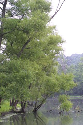 Image http://bioimages.vanderbilt.edu/lq/baskauf/wsani--wplarge13574.jpg