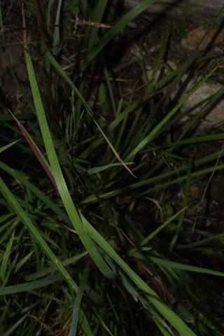 Image http://bioimages.vanderbilt.edu/lq/baskauf/wscsc--lf37593.jpg