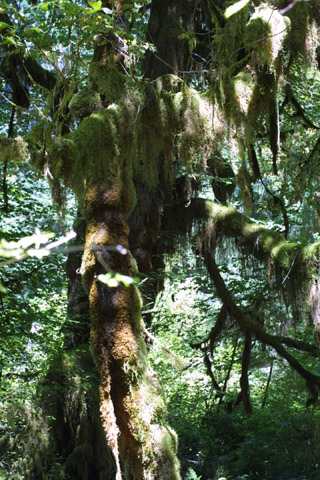 Image http://bioimages.vanderbilt.edu/lq/baskauf/wseor3-wpdistant40618.jpg