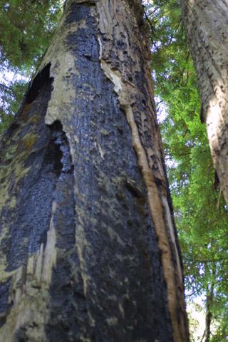 Image http://bioimages.vanderbilt.edu/lq/baskauf/wsese3-brburnt41983.jpg