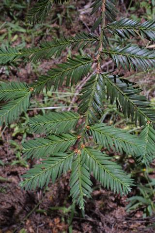 Image http://bioimages.vanderbilt.edu/lq/baskauf/wsese3-lfshade-several41853.jpg