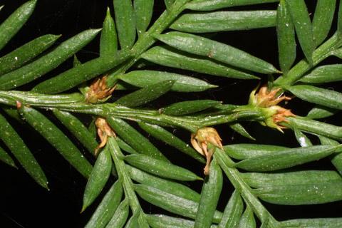 Image http://bioimages.vanderbilt.edu/lq/baskauf/wsese3-tw42033.jpg