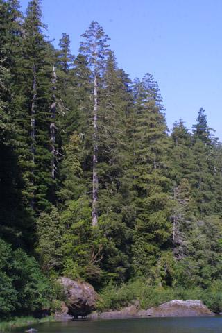 Image http://bioimages.vanderbilt.edu/lq/baskauf/wsese3-wp42127.jpg