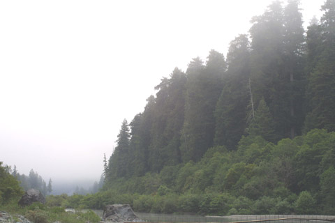Image http://bioimages.vanderbilt.edu/lq/baskauf/wsese3-wpdistant-fog42043.jpg
