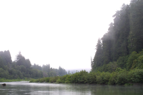 Image http://bioimages.vanderbilt.edu/lq/baskauf/wsese3-wpdistant-fog42062.jpg
