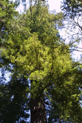 Image http://bioimages.vanderbilt.edu/lq/baskauf/wsese3-wplookup41927.jpg
